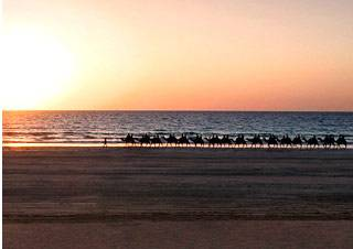 Broome-camel-riding